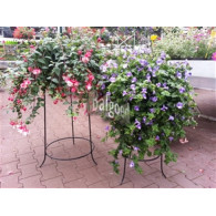bloemen standaard poedercoating hoog 70 cm ringmaat 27 cm dikte 9 mm (voor potmaat 30 cm)