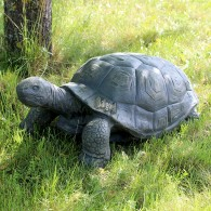 magnesium schildpad breed 76 cm