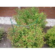 plantensteun hoog 100 cm groen poedercoating