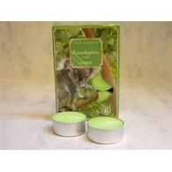 theelicht geur 18x40 box a 6 pc eucalyptus